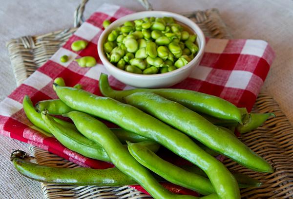 Marinated Fava Beans With Burrata Cheese – Italian Food ...