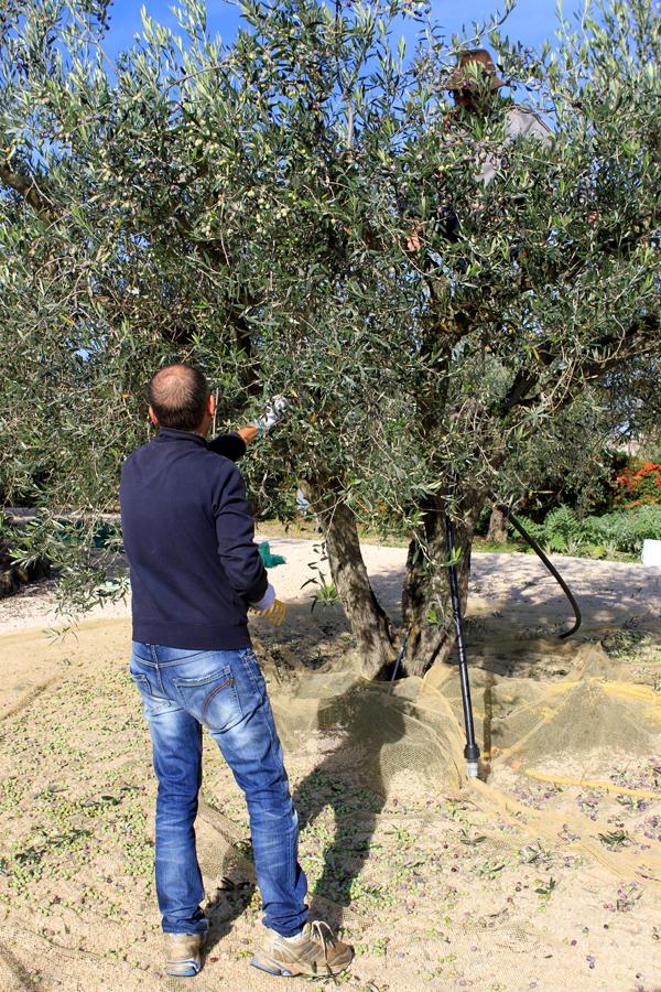 harvest1-tree