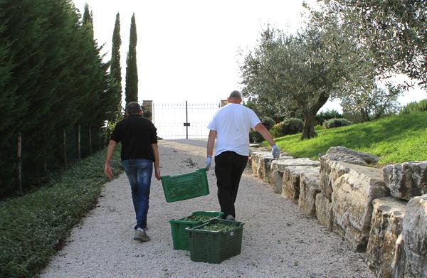 harvest2-casestocar