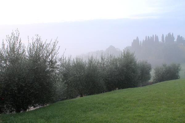 harvest2-fog