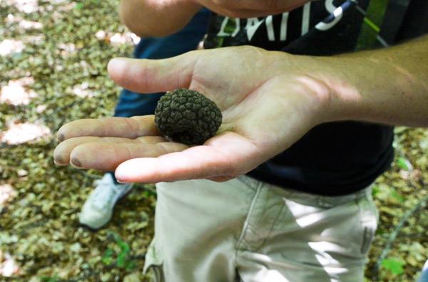 truffles8