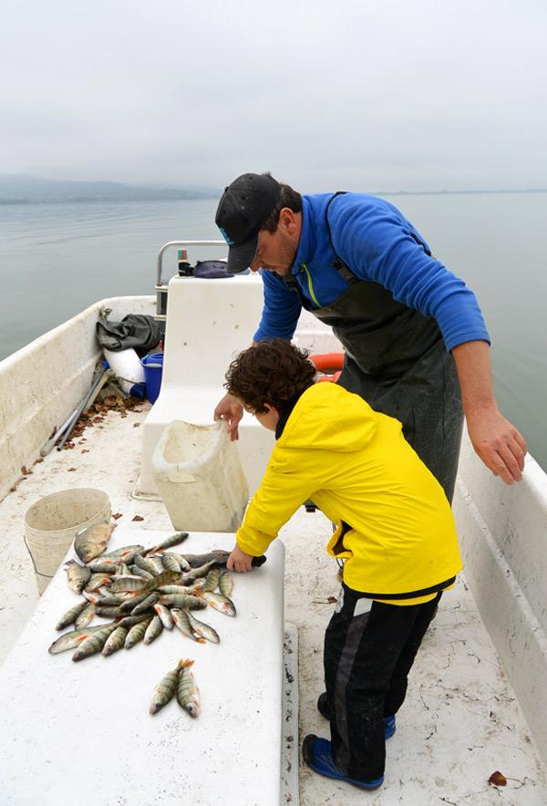 countingfish