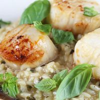 Creamy Basil Risotto With Seared Sea Scallops